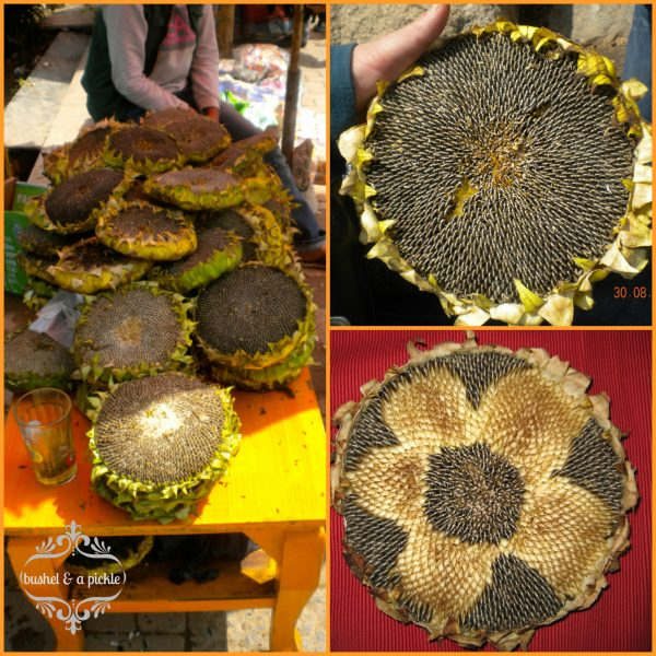 Sunflower Heads