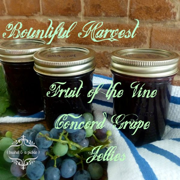 bountiful harvest Fruit of the vine Concord grape jellies