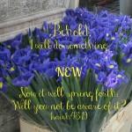 Sabbath Word… New