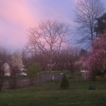 Sabbath Words…Pink Skies