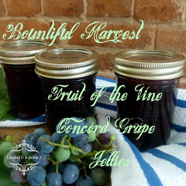 bountiful harvest Fruit of the vine Concord grape jellies