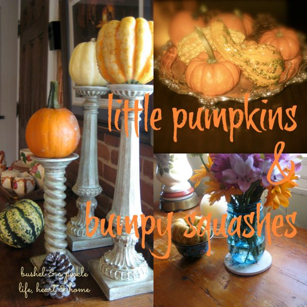 little pumpkins & bumpy squash