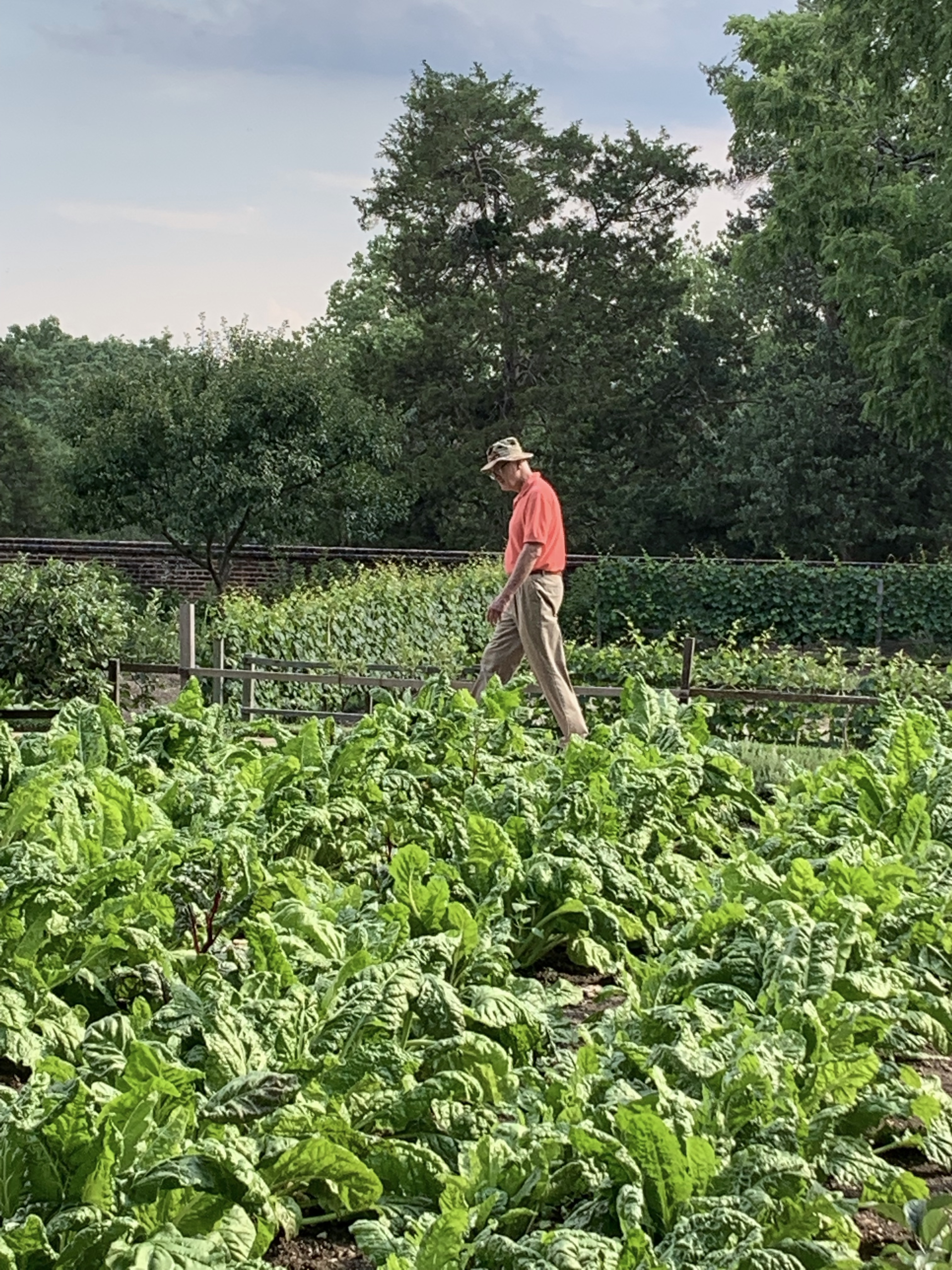 Jim Walking in Martha Washington's Garden at Mount Vernon