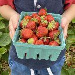Summer Strawberry Fun