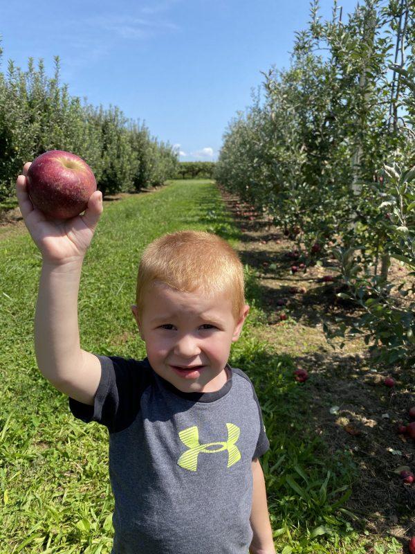 Autumn Apple Picking Cherry Hill Orchard