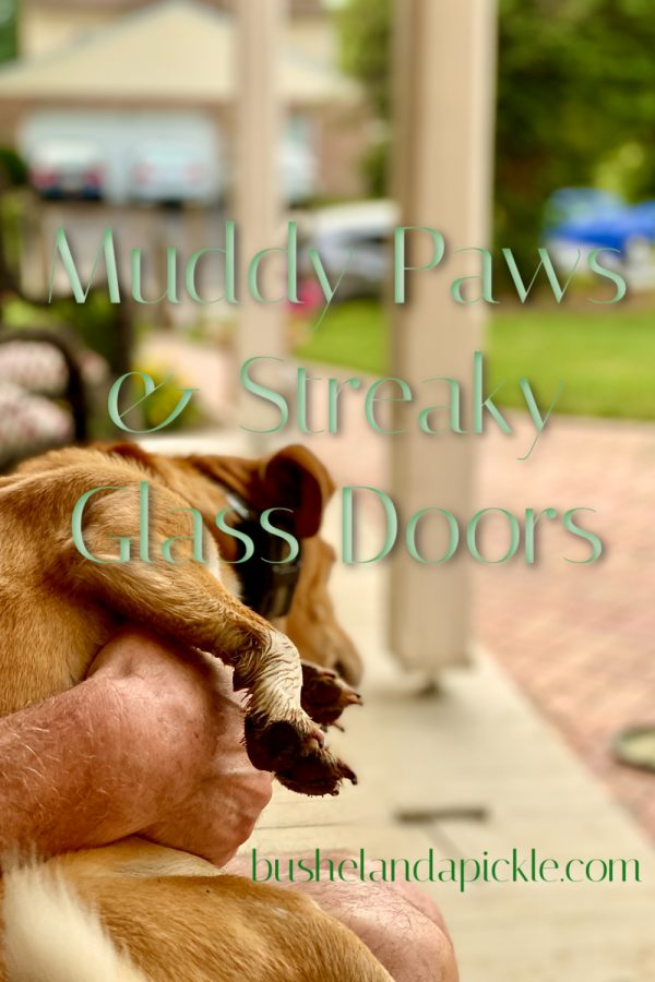 muddy paws and streaky glass door with Peach on back porch