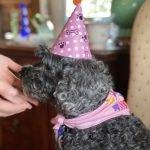 Celebrating Our Beloved Dog, Shadow