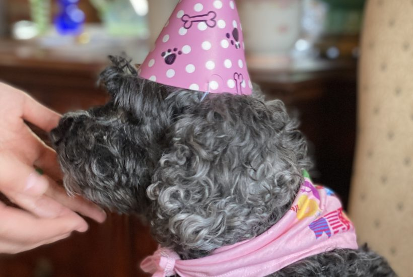 Shadow is ready for her birthday party
