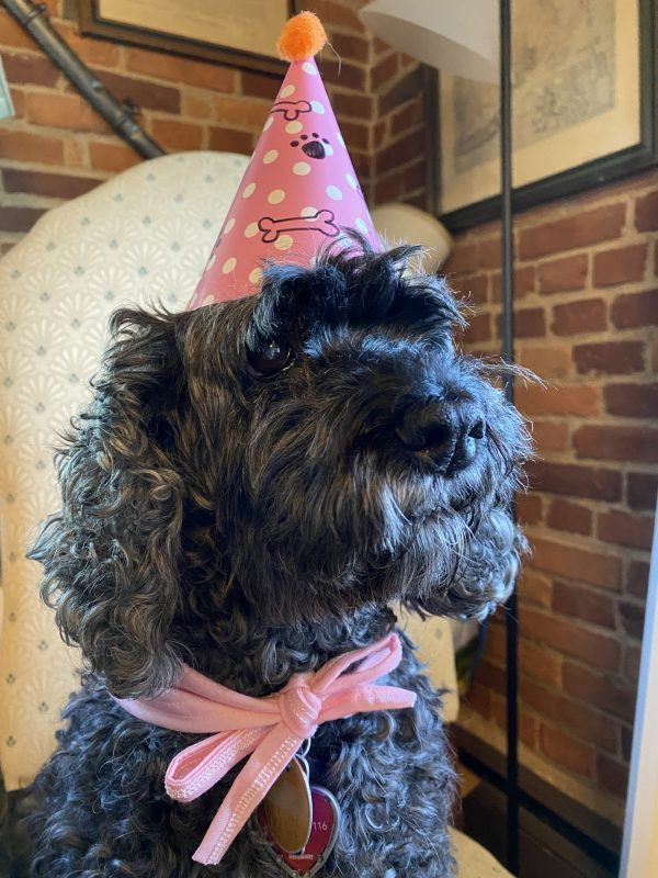 Shadow, the Birthday Dog with pink party hat and scarf